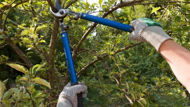 richtige zeit zum bäume schneiden